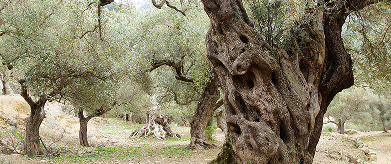 evileo_olives14